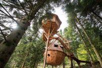 tn-cabane-dans-arbres-9274